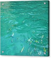 Underwater - Long Boat Tour - Phi Phi Island - 01136 Acrylic Print by DC Photographer