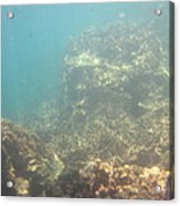 Underwater - Long Boat Tour - Phi Phi Island - 011381 Acrylic Print by DC Photographer