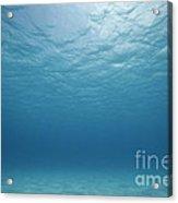 Underwater Scene. Acrylic Print