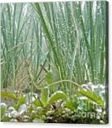 Underwater Shot Of Submerged Grass And Plants Acrylic Print