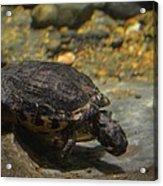 Underwater Turtle Acrylic Print