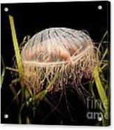 Underwater V9 Acrylic Print