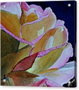 Unfolding Rose Acrylic Print