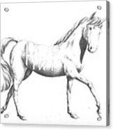Unicorn Acrylic Print by Alexander M Petersen