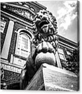 University Of Cincinnati Lion Black And White Picture Acrylic Print