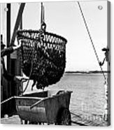 Unloading Fish From Monterey's Wharf Two Circa 1950  Acrylic Print