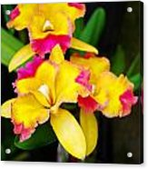 unnamed - Orchid Acrylic Print