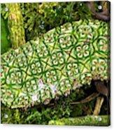 Unripe Anthurium Fruit Acrylic Print