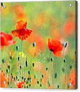 Untited Colours Of Summer  Acrylic Print