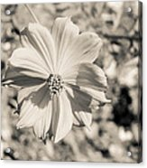 Untitled 8514 Acrylic Print by Stephen Melcher