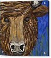 Untitled Buffalo 1 Acrylic Print