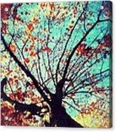 Untitled Tree Web Acrylic Print
