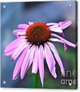 Unvarnished Acrylic Print
