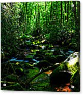 Up A Little River Acrylic Print