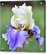 Up Close Elegant Iris Acrylic Print
