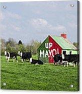 Up Mayo Acrylic Print