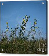 Up On The Hill Acrylic Print