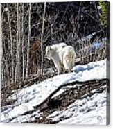 Up On The Mountain Top Acrylic Print