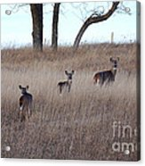Up The Hill Acrylic Print