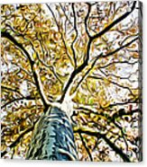 Up The Tree Acrylic Print