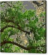 Up Through The Haunted Tree Acrylic Print