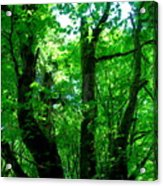 Up Through The Trees Acrylic Print