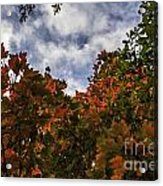 Up To The Sky Acrylic Print