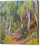 Uphill Path-batiquitos Acrylic Print