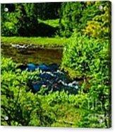 Upper Dewey Creek Acrylic Print