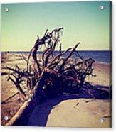 Uprooted Tree On The Beach Acrylic Print