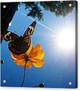 Upside Down Butterfly Acrylic Print