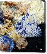 Upside Down Jelly Fish 5d24947 Acrylic Print