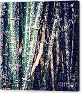 Urban Bamboo Acrylic Print