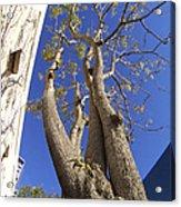 Urban Trees No 1 Acrylic Print