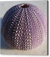 Urchin Acrylic Print