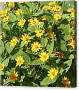 Us Botanic Garden - 121220 Acrylic Print