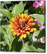Us Botanic Garden - 121221 Acrylic Print