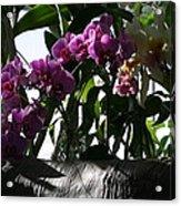 Us Botanic Garden - 121231 Acrylic Print