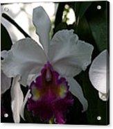 Us Botanic Garden - 121244 Acrylic Print by DC Photographer