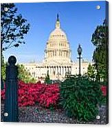 Us Capitol And Red Azaleas Acrylic Print