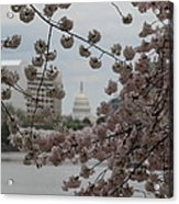 Us Capitol - Cherry Blossoms - Washington Dc - 01132 Acrylic Print by DC Photographer