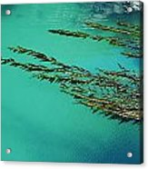 Usa, California, Seaweed Floating Acrylic Print