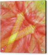 Usa, Hawaii Anthurium Flower Montage Acrylic Print