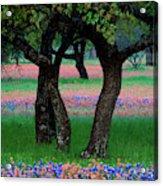 Usa, Texas, Hill Country, Texas Acrylic Print