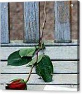 Valentine Rose. Acrylic Print