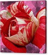 Valentine's Day Rose Acrylic Print