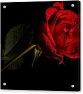 Valentine's Day Velvet Rose Acrylic Print