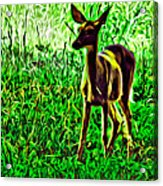 Valley Forge Deer Acrylic Print