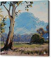 Valley Gum Tree Acrylic Print