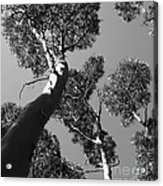 Valley Of The Giant Tingles Bw Acrylic Print